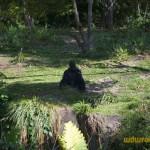 Wild-Africa-Trek-wdwradio-701