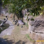 Wild-Africa-Trek-wdwradio-728