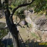 Wild-Africa-Trek-wdwradio-745