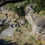 Wild-Africa-Trek-wdwradio-751