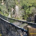 Wild-Africa-Trek-wdwradio-781