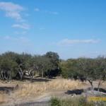 Wild-Africa-Trek-wdwradio-830