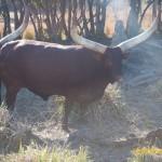 Wild-Africa-Trek-wdwradio-853