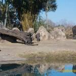 Wild-Africa-Trek-wdwradio-871