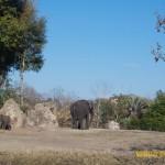 Wild-Africa-Trek-wdwradio-873