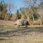 Wild-Africa-Trek-wdwradio-896