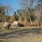 Wild-Africa-Trek-wdwradio-898